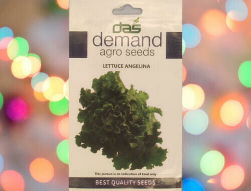 Demand Agro Lettuce Angelina