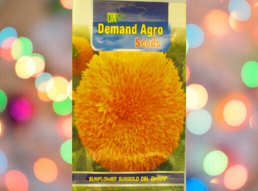 Demand Agro Sunflower Sungold Dwarf