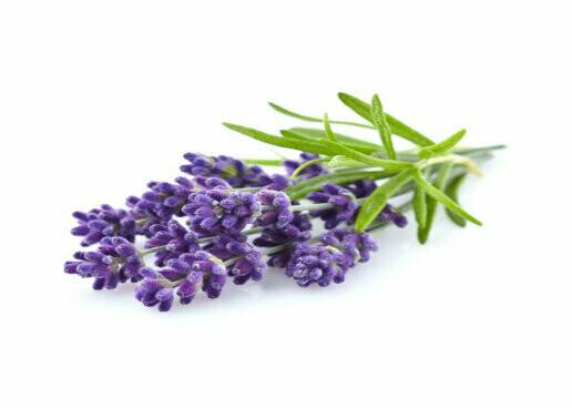 Lavender Seeds (50 seeds)