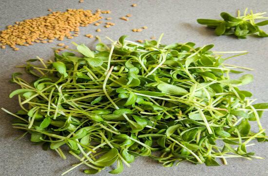 Microgreen Fenugreek Seeds(10gms)