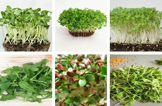 Assorted Microgreen Pack