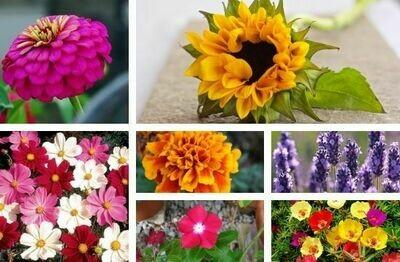 Summer Flowers Pack