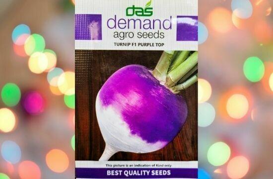 Demand Turnip F1 Purple Top