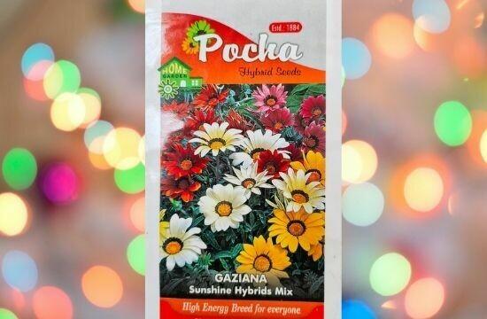 Pocha Gaziana Sunshine Hybrid Mix