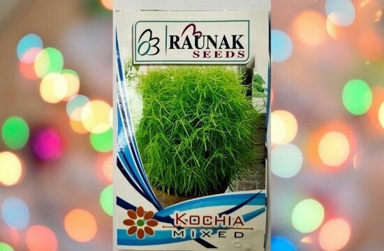 Raunak Seeds Kochia Mixed
