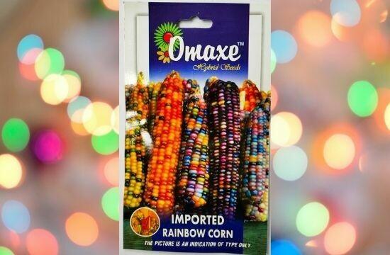 Omaxe Imported Rainbow Corn