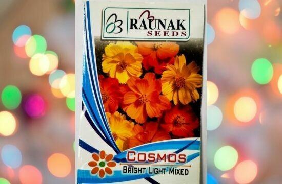 Raunak Seeds Cosmos Bright Light Mixed