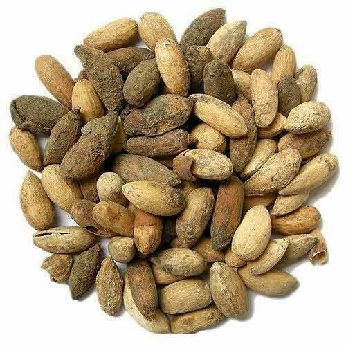 Neem Seeds (3 Seeds)