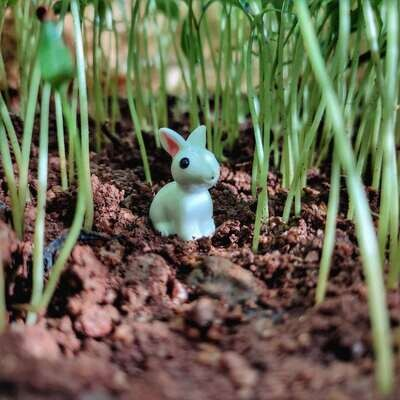 Miniature Rabbits Assorted (Single Piece)