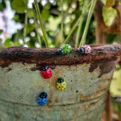 Lady Bug (Single Piece)