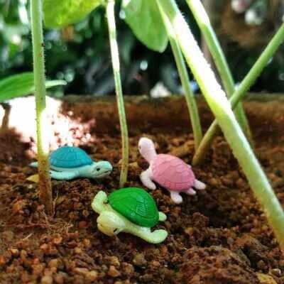 Miniature Turtle Assorted (Single Piece)