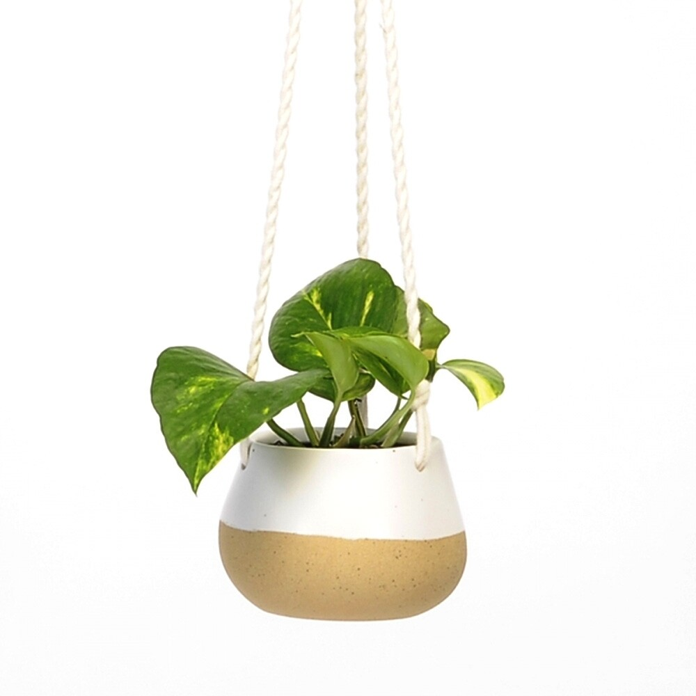 Hanging Pot With White Speckles