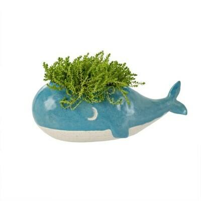 Indaba Whale Planter