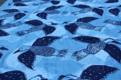 Magpie Goose  (Blue)