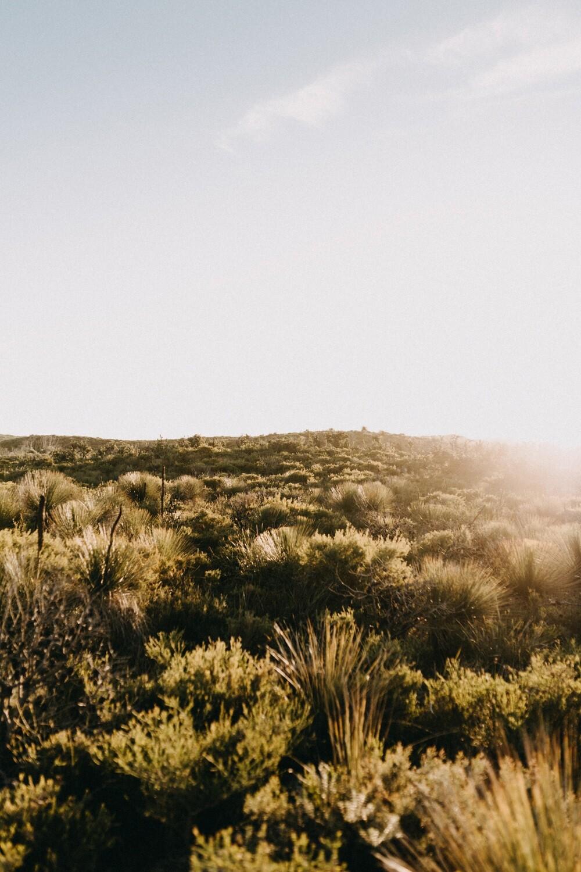 Grass Tree Horizon