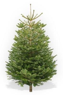 125-150cm Low Drop Christmas Tree