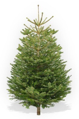 125-150cm Low Drop Christmas Tree