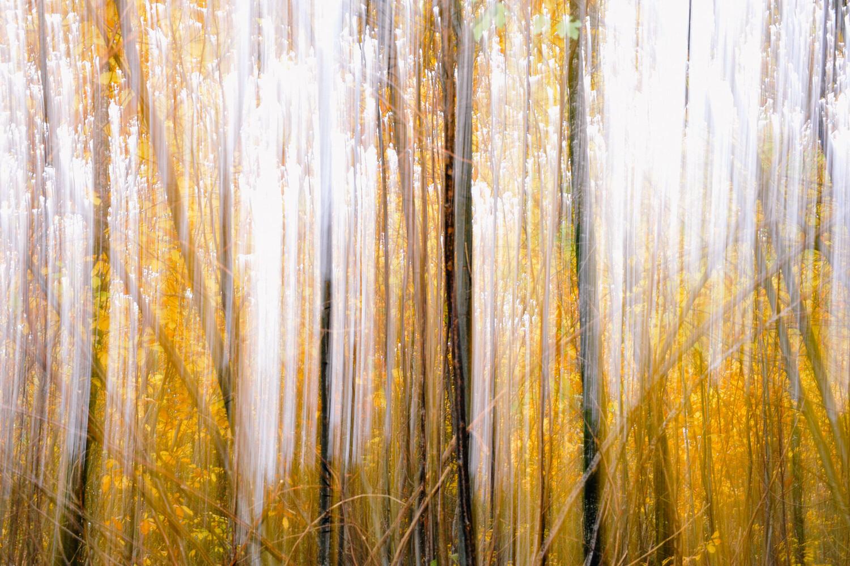 Rideau d'automne