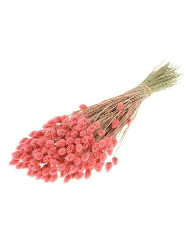 Gedroogde Phalaris Pink