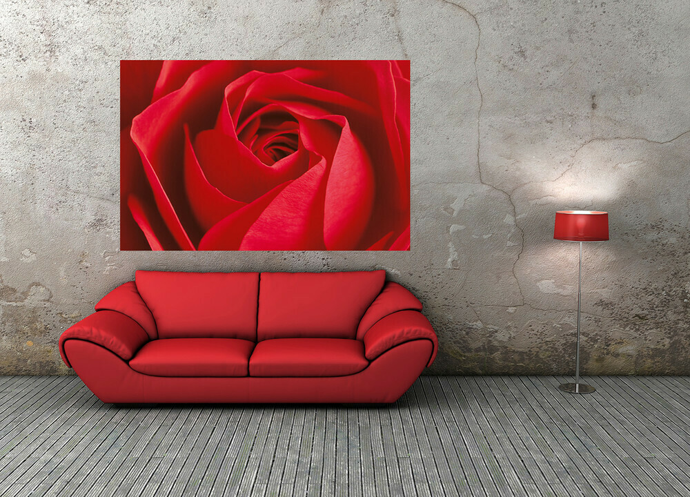 L'Important C'est La Rose Wall Mural