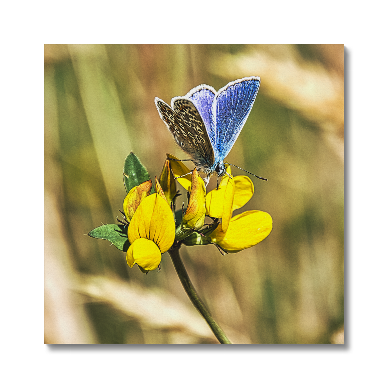 Premium Butterfly Canvas Print 24X24 Inch