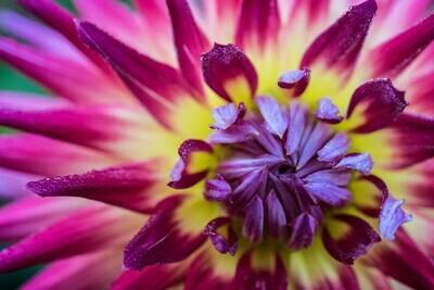 Purple, Yellow, Pink Delight 11x14