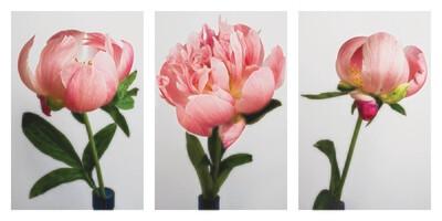 Pretty in Pink Framed