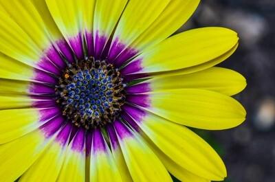 Yellow Sunshine 11x14