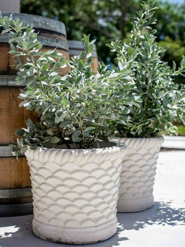 Vintage Scallop Planter Pair - SOLD
