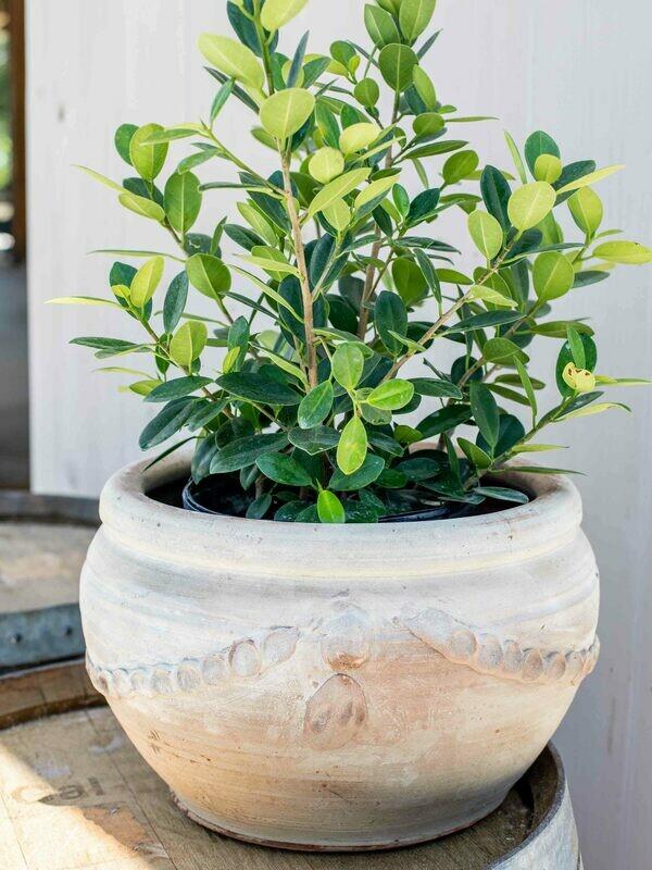 Handmade Medium Tuscan Planter