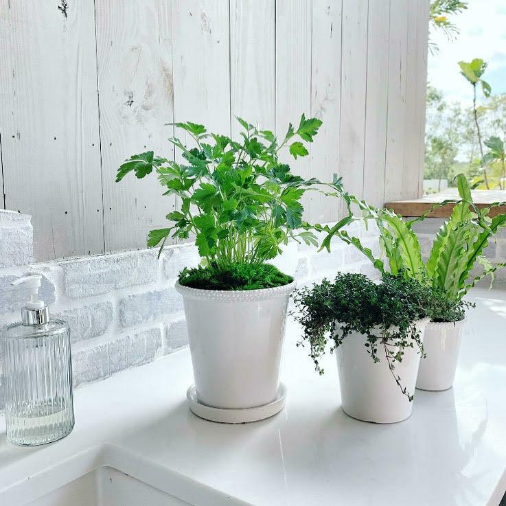 Swiss Dot Ceramic Herb Trio