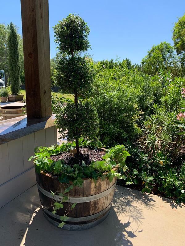 English Garden In A Pot