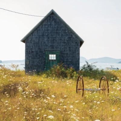 Island Flower Field