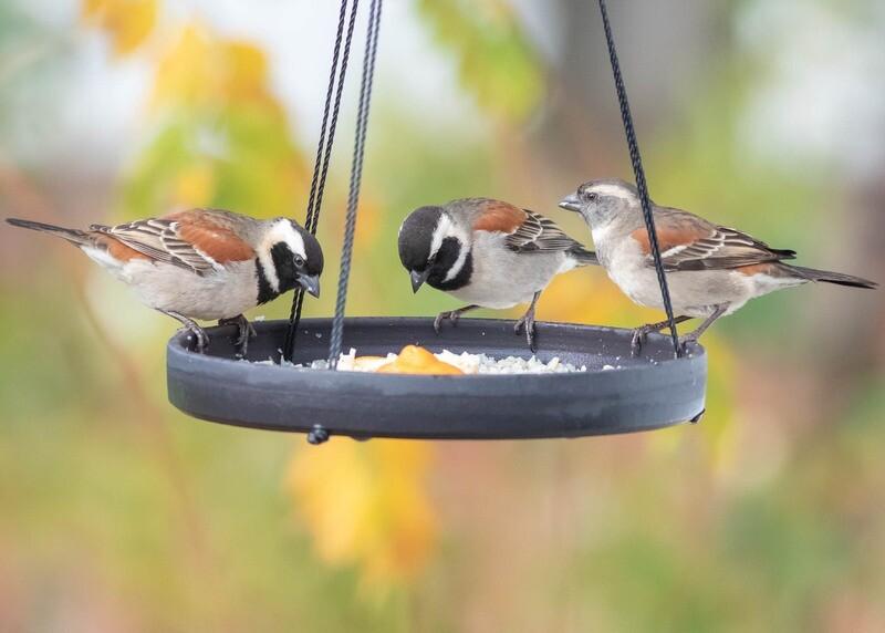 Bird Table - Hanging - Sml