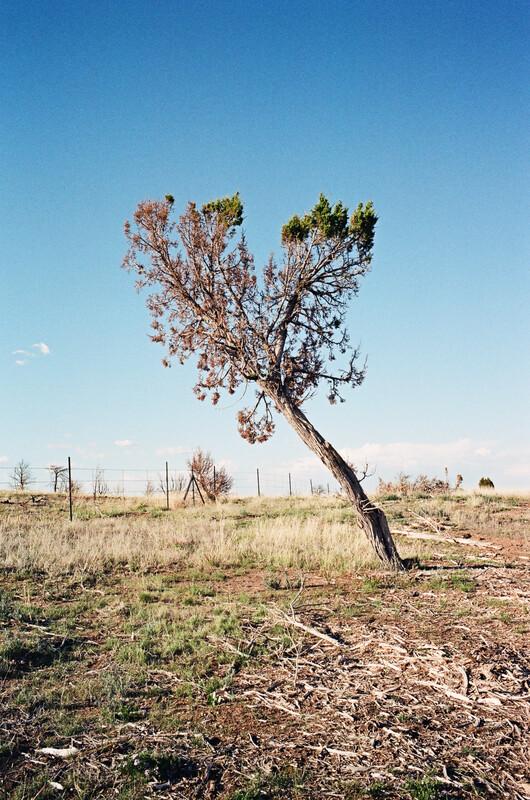 """tree"" fine art photographic print"