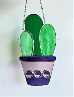 Columnar Cactus Grouping