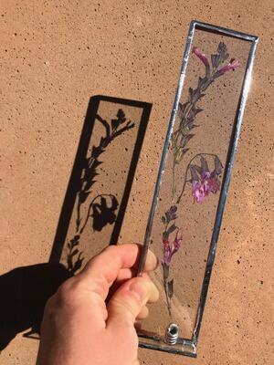 Pressed Salvia Flowers