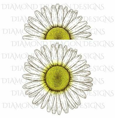 Flowers - Whole Daisy, Half Daisy, Vintage Daisy, Daisy Flower, Waterslide