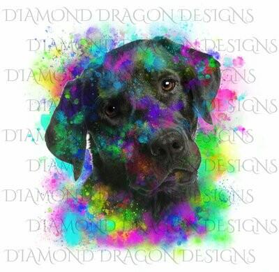 Dogs - Watercolor Lab, Labrador, Rainbow Labrador, Watercolor dog, Waterslide