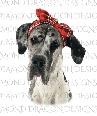 Dogs - Great Dane with Plaid Bow, Waterslide