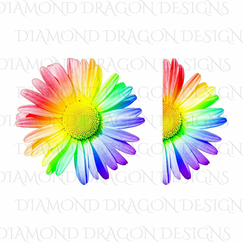Flowers - Whole Daisy, Half Daisy, Rainbow Daisy, Daisy Flower, Pride, Digital Image