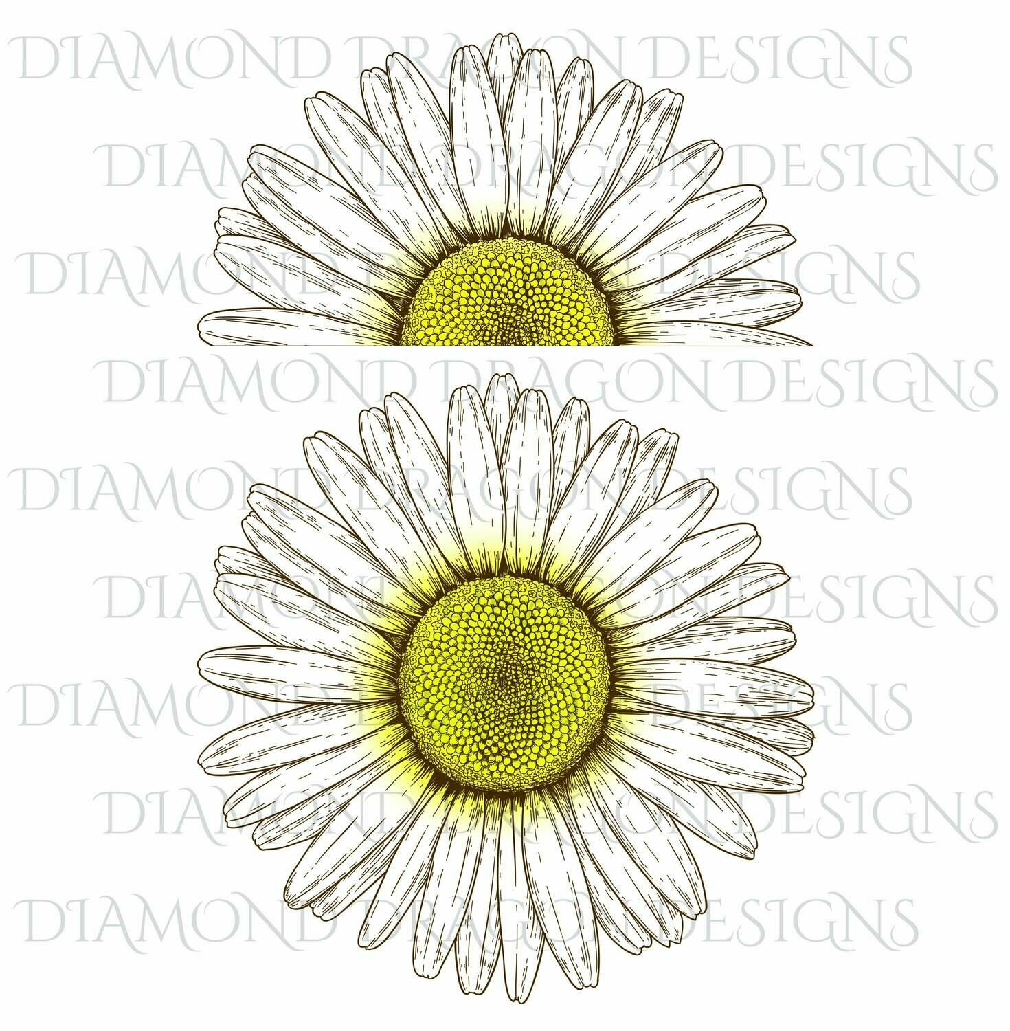 Flowers - Whole Daisy, Half Daisy, Vintage Daisy, Daisy Flower, 2 Image Bundle, Digital Image