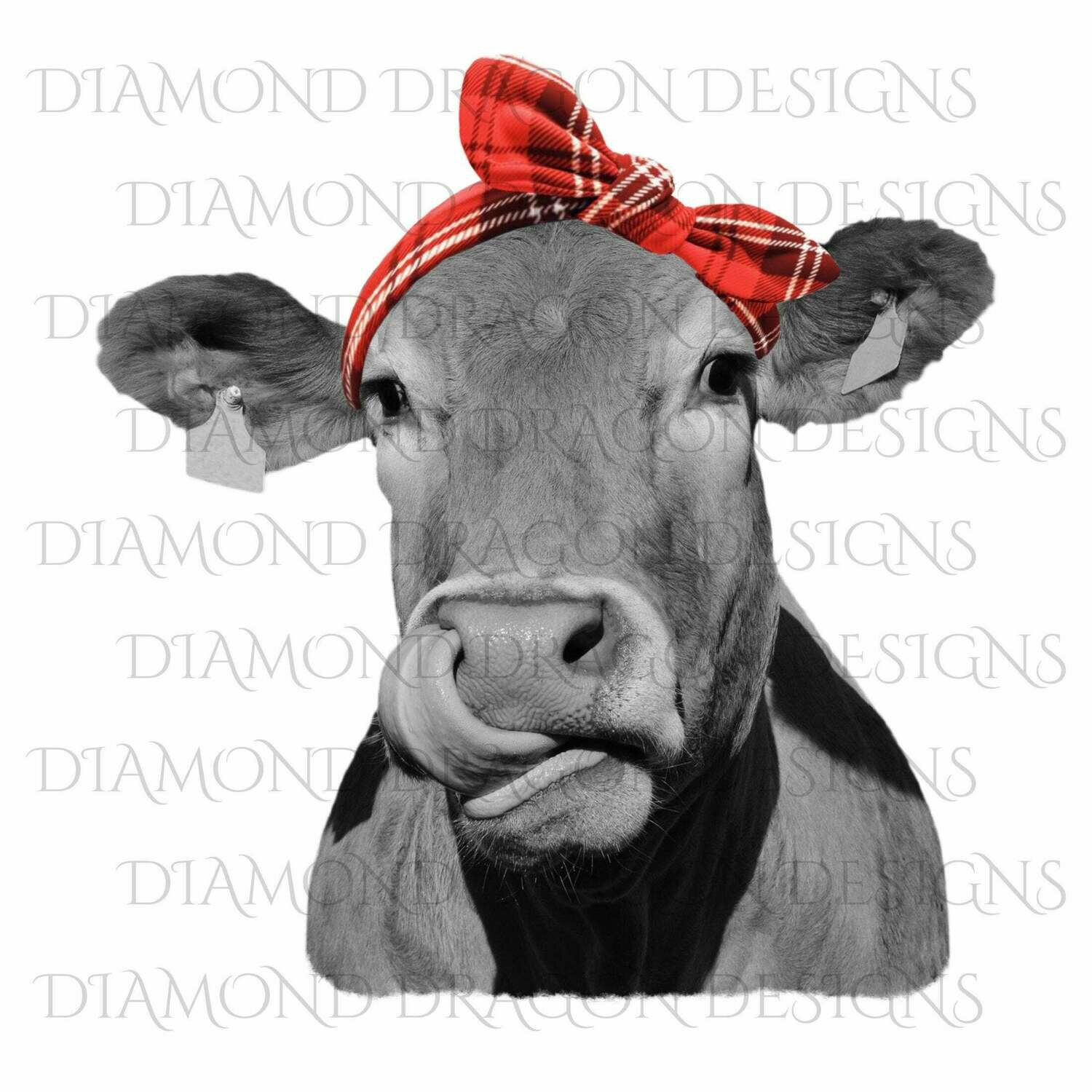 Cows - Heifer, Image, Cute Cow with Red Plaid Bandana, Cowlick, Cow Tongue Out, Heifer, Digital Image