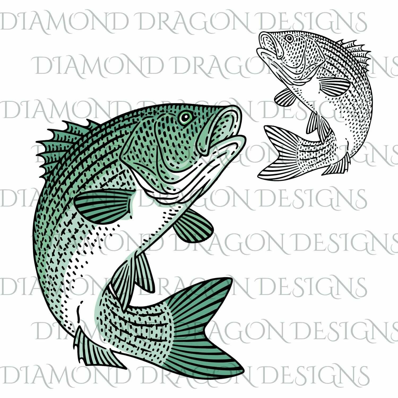 Fishing - Striped Bass, Fishing, Father's Day, Bass Fish Image, Striped Sea Bass, Digital Image