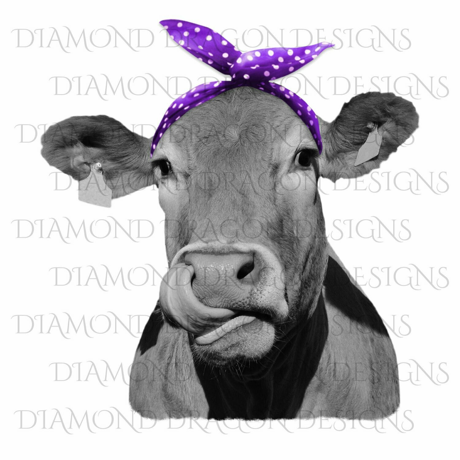 Cows - Heifer, Cute Cow with Purple Polkadot Bandana, Cowlick, Cow Tongue Out, Digital Image