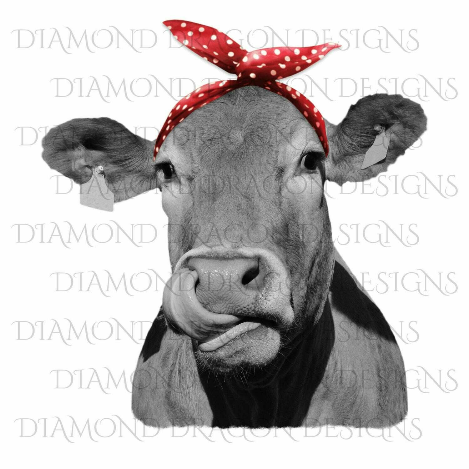 Cows - Heifer, Cute Cow with Red Polkadot Bandana, Cowlick, Cow Tongue Out, Digital Image