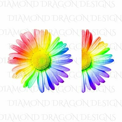 Flowers - Whole Daisy, Half Daisy, Rainbow Daisy, Daisy Flower, Pride, Digital Image