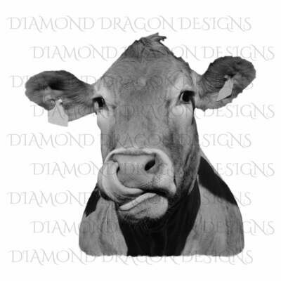 Cows - Heifer, Image, Cute Cow with Cow Lick, Cow Tongue Out, Heifer,Black & White, Digital Image