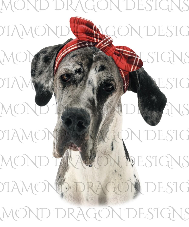 Dogs - Great Dane, Red Bandana, Digital Image