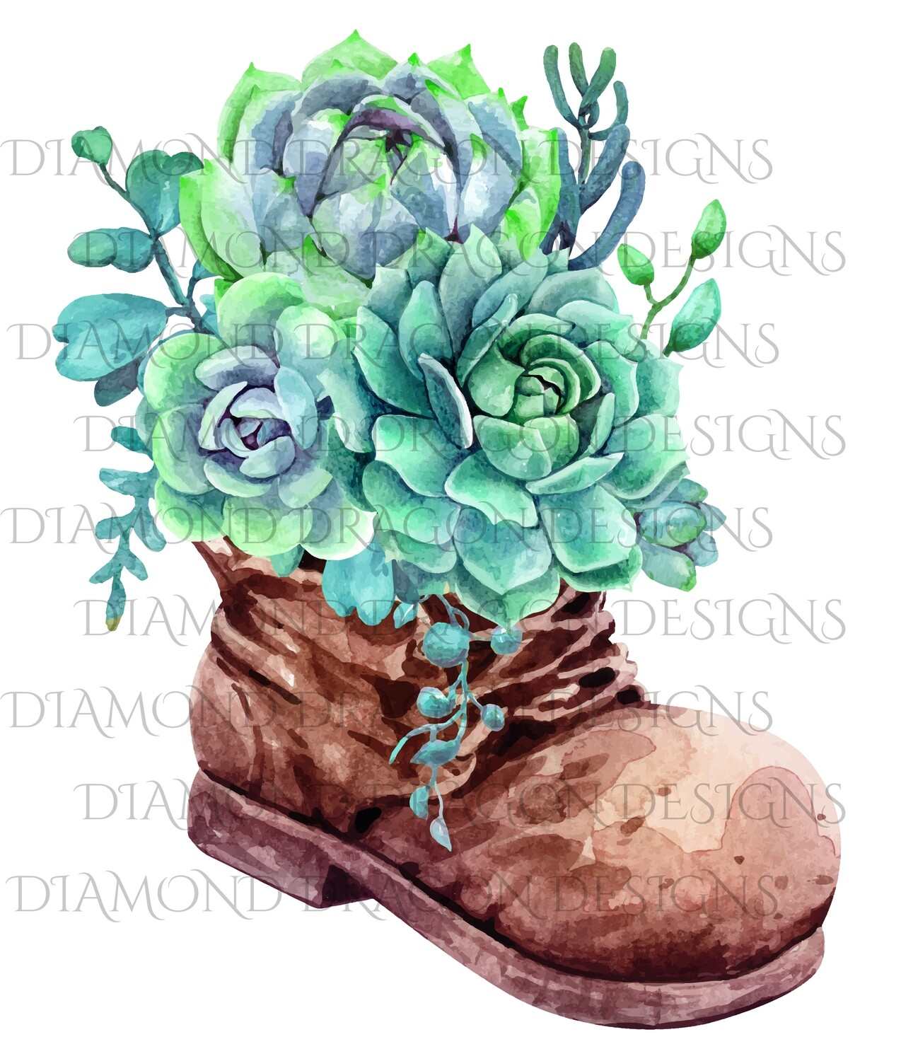 Cactus - Succulents in Boot, Digital Image